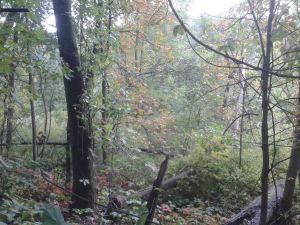 Fall Pic 2